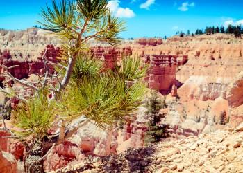 Photography Utah 1